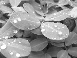 hojas con lluvia