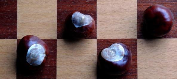 chestnut-1714659_1280